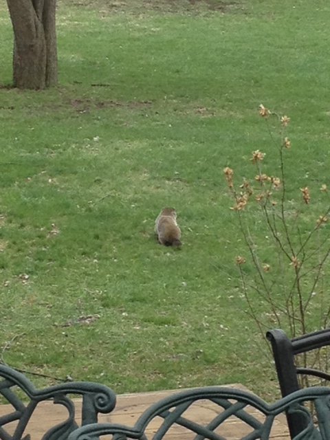 "Reginald, or ""Reg,"" our groundhog."